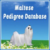 maltese pedigree database banner