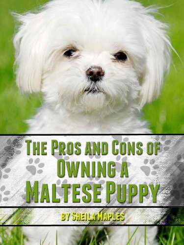 the pros and cons of owning a maltese maples